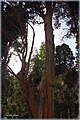 Garden fin باغ فين كاشان - panoramio.jpg