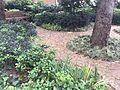 Garden with stone path.JPG
