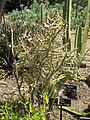 Gardenology.org-IMG 4276 hunt0904.jpg