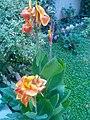 Gardens in Baghdad 69.jpg