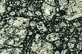 Gardnos Breccia (385 to 900 Ma; Gardnos Impact Structure, southern Norway).jpg