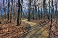 Gfp-missouri-taum-sauk-state-park-pathway-to-the-top.jpg