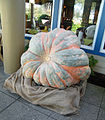 Giant pumpkin in Napa, California A - Stierch.jpg