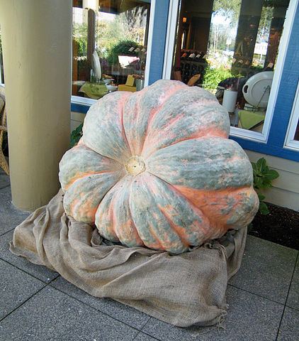 Giant Pumpkin By Sarah Stierch (Own work) [CC BY 4.0 (https://creativecommons.org/licenses/by/4.0)], via Wikimedia Commons