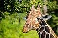 Giraffe-958243 960 720.jpg