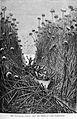 Giraud-Lake Bangweolo-1892.jpg