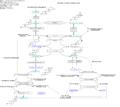 Glucocorticoid Mineralocorticoid Metabolism.png