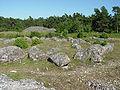 Gotland-Galrum 10.jpg