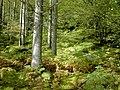 Gougan Barra Forest Park - geograph.org.uk - 725318.jpg