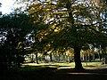Granby Wood Longshaw Estate - geograph.org.uk - 2123241.jpg