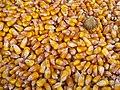 Granos de maiz (16546307682).jpg