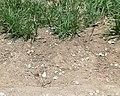 Gravel-Turf.jpg