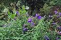 Green Spring Gardens in October (22765474546).jpg