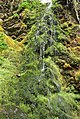 Green wall near the big burn - panoramio.jpg