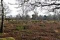 Greenham Common - geograph.org.uk - 1187323.jpg