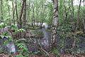 Grosses Torfmoor Wald O02.jpg