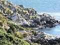 Gypsy Cove 01 (3444781731).jpg