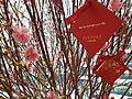 HK 中環 Central 歷山大廈 Alexandra House mall CNY tree red lucky signs January 2020 SS2 01.jpg