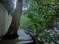 HK 北角 North Point 香花徑 Aroma Walk rain 06 tree trunk Dec-2013.JPG
