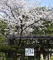 Hanazono University historical garden 2016-1.JPG