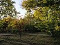 Hasanarkı Meyve Bahçesi.jpg