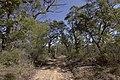 Heathcote NSW 2233, Australia - panoramio (55).jpg