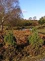 Heathland on the edge of Goatspen Plain, New Forest - geograph.org.uk - 624828.jpg