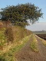 Hedgerow and Track to Snakeholme Farm - geograph.org.uk - 602034.jpg