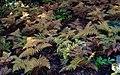 Helechos multicolores (45721340295).jpg