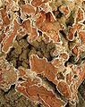 Hemimorphite-158408.jpg