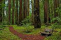 Hendy Woods State Park.jpg