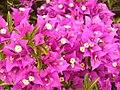 Herbst im Britzer Garten (Autumn in Britz Garden) - geo.hlipp.de - 28658.jpg