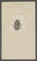 Heterogamia - Print - Iconographia Zoologica - Special Collections University of Amsterdam - UBAINV0274 065 02 0003.tif