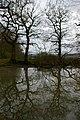 High Weald Pond - geograph.org.uk - 731261.jpg
