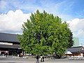 Hongan-ji National Treasure World heritage Kyoto 国宝・世界遺産 本願寺 京都461.JPG