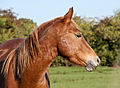 Horse in autumn sun (5090357352).jpg