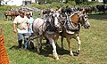 Horse pulling competition Sheffield Field Day 2017 Vermont 06.jpg