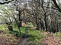 Hoyland Bank bridleway - geograph.org.uk - 782559.jpg