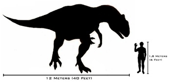 Size comparison between the carnosaurian thero...