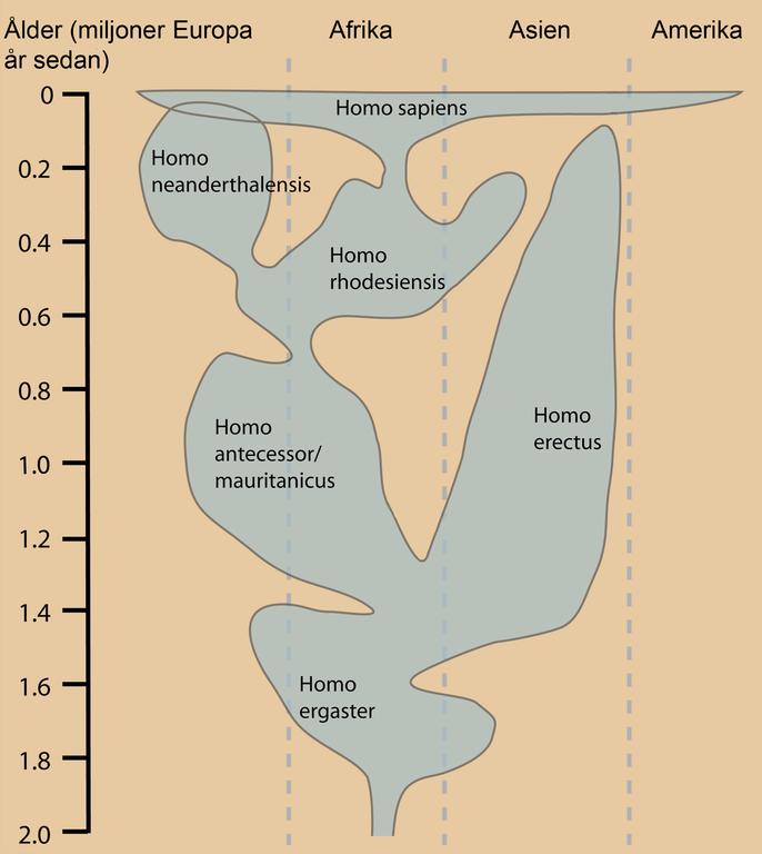 Släktet Homos utbredning i tid och rum.