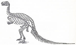 Altispinax - Von Meyer's restoration of Megalosaurus with long neural spines