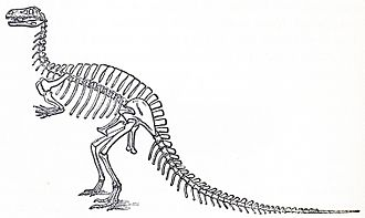 Altispinax - Von Meyer's restoration of Megalosaurus with long neural spines