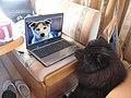 Hund der in den Computer schaut.jpg