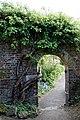 Hydrangea petiolaris, climbing hydrangea at Myddelton House garden, Enfield, London, England.jpg