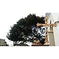 ISLA DE TOAS - ESTADO ZULIA.jpg
