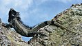 Iguana melanoderma Breuil et al 2020.jpg