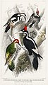 Illustration from A History of the Earth and Animated Nature by Oliver Goldsmith from rawpixel's own original edition of the publication 00058.jpg