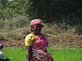 India - Sights & Culture - Planting Rice Paddy 2 (5208914818).jpg