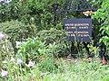 Inselfriedhof, Kloster, Felsenstein-Familiengrab, 2019-06-12 ama fecIMG 4067.JPG