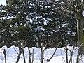 Iroquoian Village, Ontario, Canada34.JPG